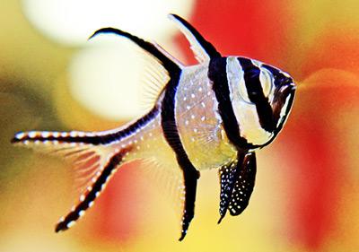 fish337281's Avatar